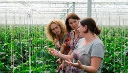 BiedOptimaal helps growers on the energy market